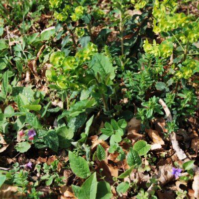 Vegetatie 11