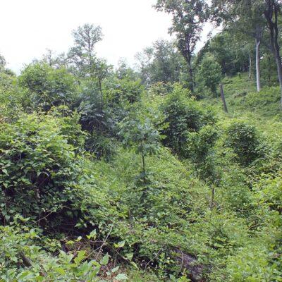 Vegetatie 5